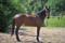Stall hoas nya häst