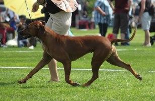 Kokkola dogshow Finish CH