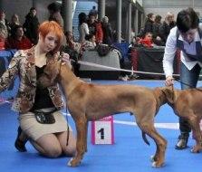 5. Jack (Ave-Caesar Armagniac)- best puppy atBrno
