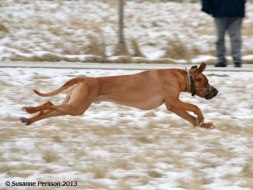 Winter Coursing Jack (Ave Caesar Armagniac)