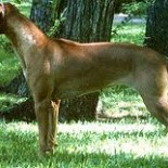 Wyndrunhr Lyka Lionyss