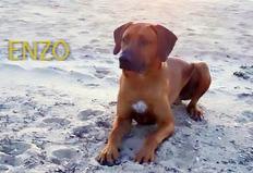 1 y o Enzo