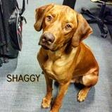 shaggy 11 months