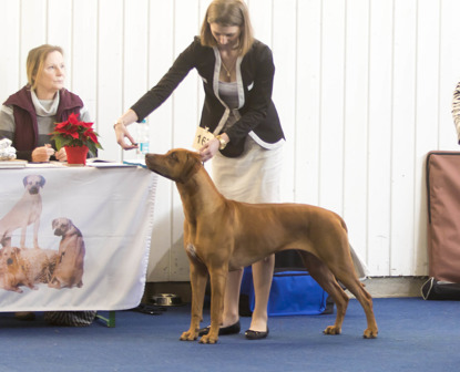 Lisi in tte ring with her handler Dasha