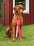 Royce is best liver at Röstånga speciality show
