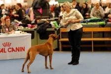 lisi at Nordic winner