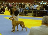 växö 2013 BOB puppy