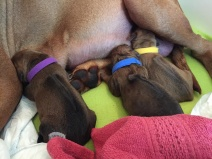 22 apr föddelse