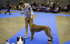 Duba at my dog show kick her mother4E6A3985