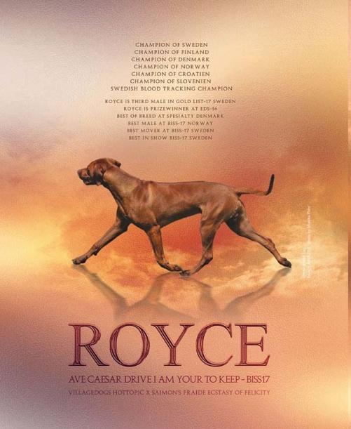 Royce 6 months