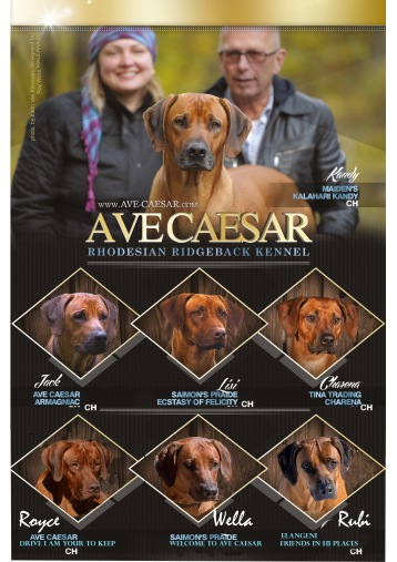 we and our 7 ridgebacks