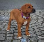 neema proud puppy
