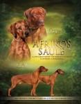 Africous Saule