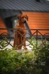 Maxi vaktar Romeo