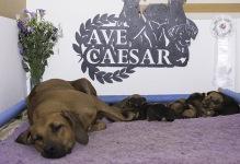 Nova with pups
