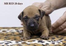 i-red 20 days 2