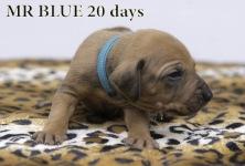 I-blue 20 d