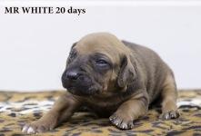 I-white 20 days-1