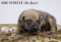 I-white 20 days