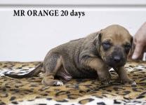 I-orange 20 days