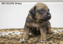 i-yellow 20 days