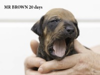 i-brown 20 days 1