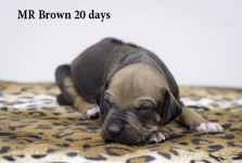 i-brown 20 days