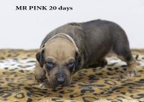 I-pink 20 d