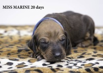 i-marine 20 days