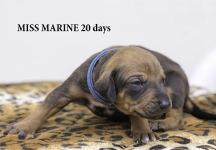 i-marine 20 days 1