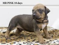 I-pink 18 d -1