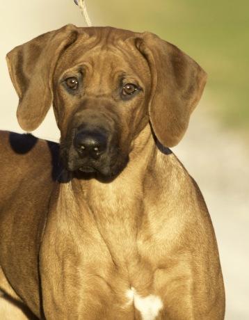 Nash puppy