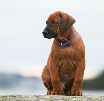Moyo  puppy