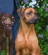 Moyo P best head at specialty show