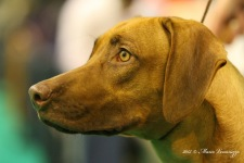 Lisi - BOS puppy in Slovenien