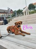 Elvis 1 y o