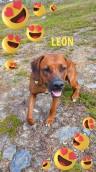 Leon 1 y o
