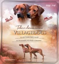 Villagedogs Take a chance on me