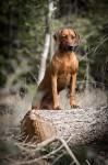 Greta 2 y o står på trä