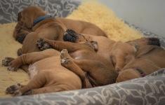 k-ornage sleeping on siblings