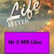 3 lilac