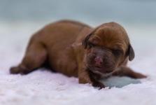 Leo 3 days old
