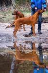 stack spegel Bazze
