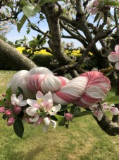 Apple blossom sockgarn