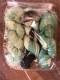 GARNLYCKAS 17dagarssjal - 17dagarssjal grön/svart