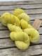 Ensamma härvor sockgarn - Citron