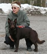 Årets Patrullhund SE BCH SE uch C.I.B Tjh II (FM) Aussie Action´s Red Kidoo