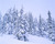 Vinter i granskogen