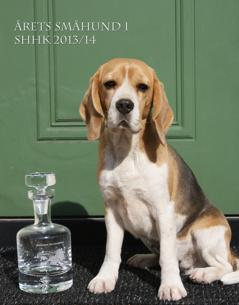 Årets beagle