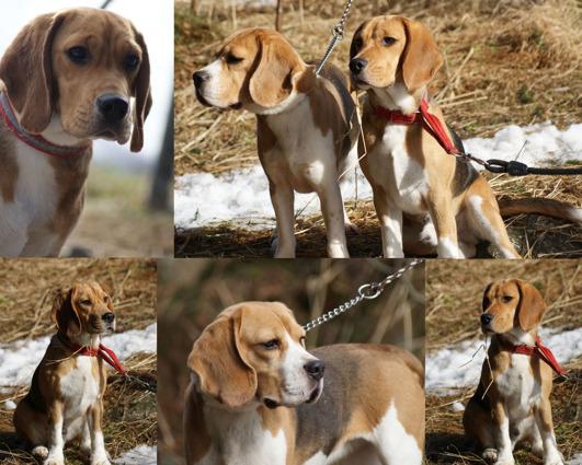 Aviatrix Beagle
